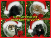 Merry Christmas and Happy New Year 2017 to all Jigidi friends  from all at DL Castle♥♥♥