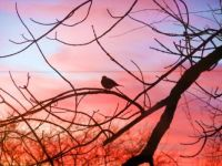 Bird silhouette in the sunset