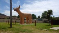 "The ""GOLDEN DOG"", Glenreagh, NSW - a lesser known Australian Big Thing"