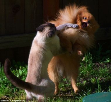 Perfect Animal Shots: Cat & Dog fight