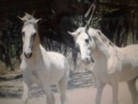 Marching for the Wild Horses & Burros. Sign up with Tina Wooten