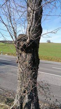 Stettbach Tree