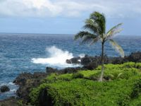 Paradise on the Island