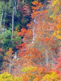 See the waterfall through the fall leaves - Blue Ridge Pkway