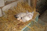 mother hen- I mean kitten. ???