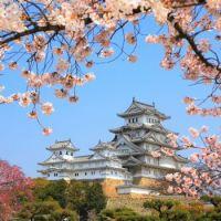 Cherry Blossoms in Matsumoto Castle