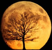 Theme: Round Things - Our Beautiful Moon