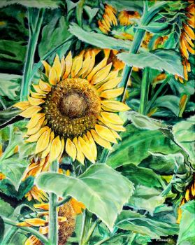 Sunflower Painting by Karl wagner