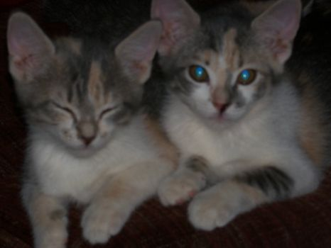 Twinkle on left Belle on right