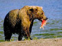 Medved s rybou