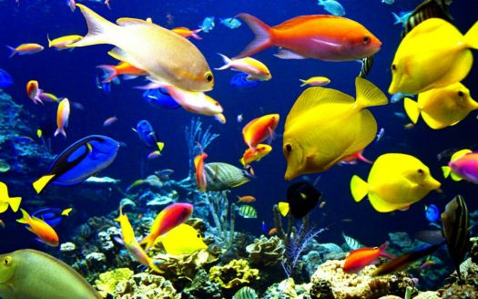 tropical_harmony_fishes_desktop_1680x1050_free-wallpaper-31775