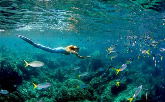 Linden Wolbert swims with fish at Rock Islands in Palau
