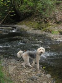 Mais Mais Explores a Scappoose creek