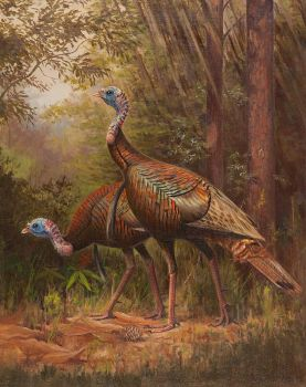 Owen J. Gromme--Wild Turkeys, 1943