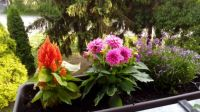 rozkvetlý balkon