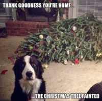 Thank goodness you're home