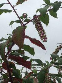 Strange flower or fruit