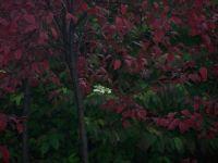october in my backyard
