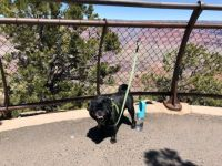 Clara at the Grand Canyon