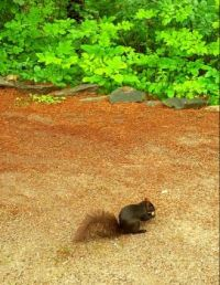 Then came the black squirrel.