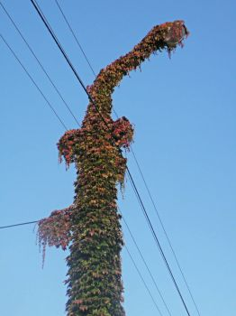 spoutaný podzimní drak
