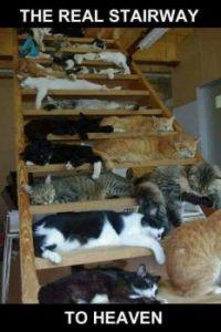 Cat Stairway tp Heaven