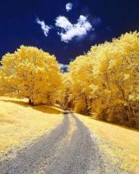 Yellow Tree Road