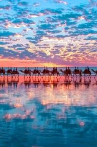 Cable of Camels on the beach at Sunset...