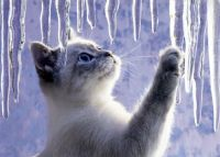 Icicle fascination