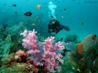 Diving-Similian islands