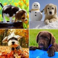 The four seasons.....cute puppies