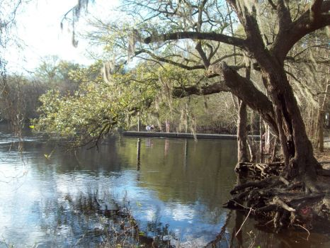 On Edisto River