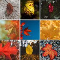 Autumn Leaves Large