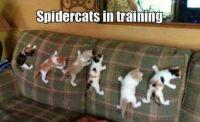 Spider Cat School