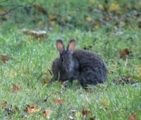 rabbit (knijn☺)