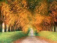 desktop-achtergrond-natuur-herfst