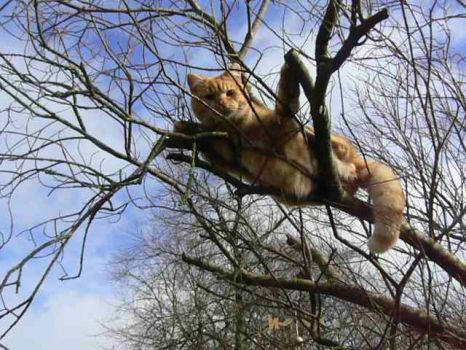 Cat George up a tree