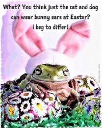 Easter Frog . . . . .   lela, Where Are Yoooooooooou   ꒰(•‿•)꒱
