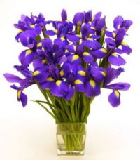 Bouquet of purple iris'