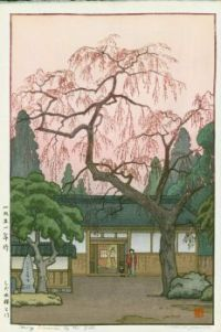 Cherry Blossoms By The Gate