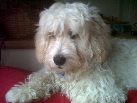 Alfie - I need a hair cut