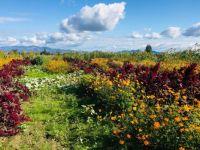 Wild Flowers on Camano Island, WA