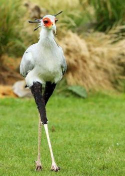 Dear Sir, In response to your letter dated the 15th ...... (Secretary Bird)