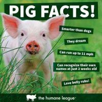 Piggy oinks :-)
