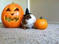 Senor Tamale says Happy Halloween!
