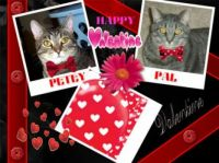 Happy Valentine's Day from Petey and Pal!