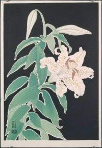Pink Morning Glory - Hanmoto Uchida 1950