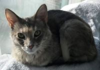 Chloe (medium)