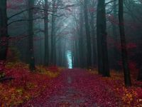 Autumn Woods, Germany