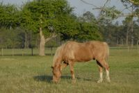 ROY IN THE NEW PASTURE